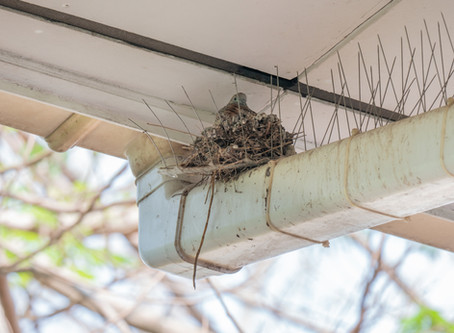 3 Bird Removal Tips for Facilities to Meet Australian Food Standards
