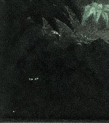 el puma.jpg