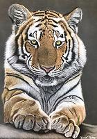 tigrepastel1.jpg