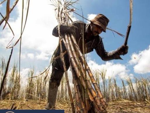 TRF3 reconhece tempo especial e confirma aposentadoria a trabalhador de lavoura de cana-de-açúcar