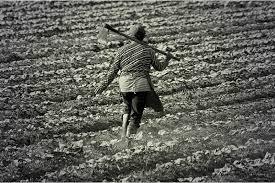 Aposentadoria por atividade rural é negada mediante falta de provas documentais