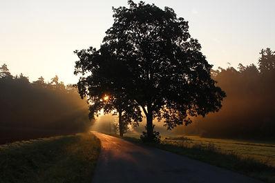 Baum Sonnenaufgang.jpg
