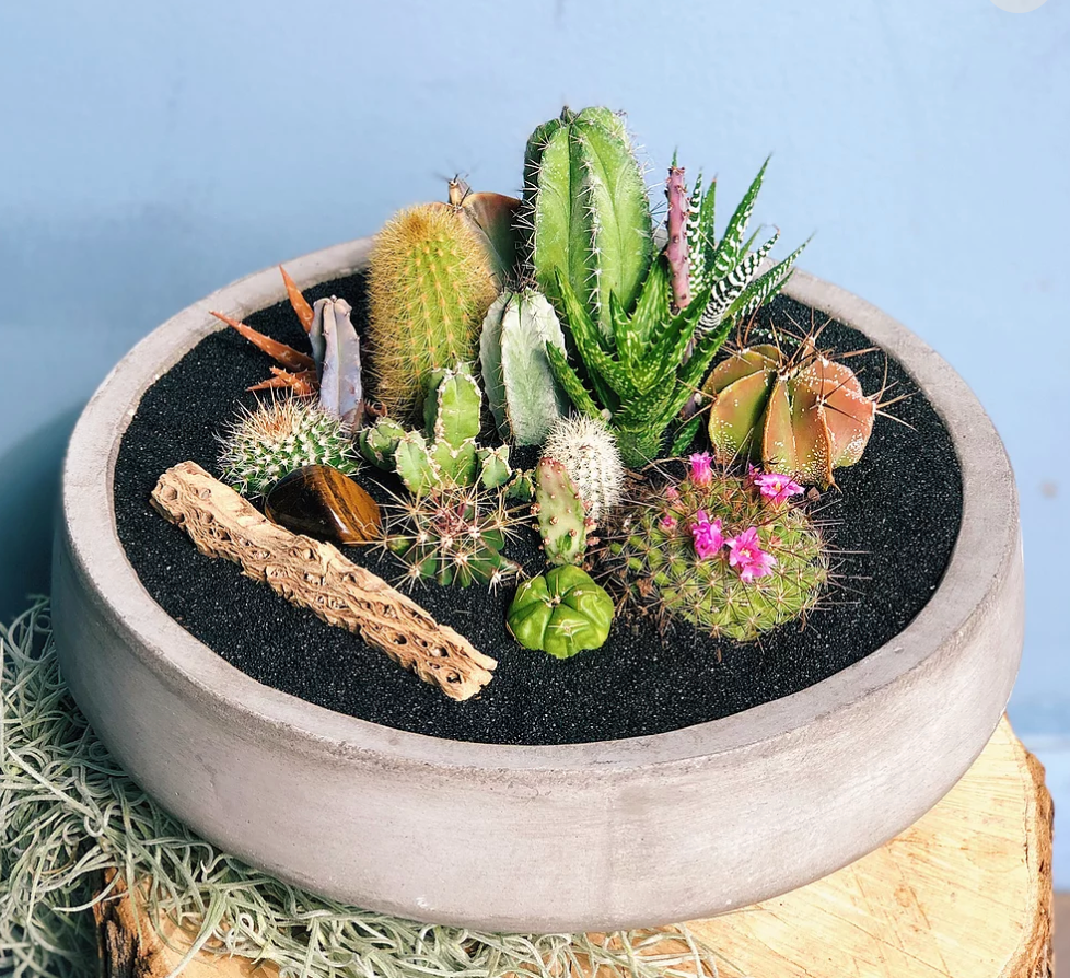 large succulent centerpiece arrangement in cement planter