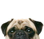 Virtual Puppy Love (and other furry friends!) Event 12/2 @ Noon