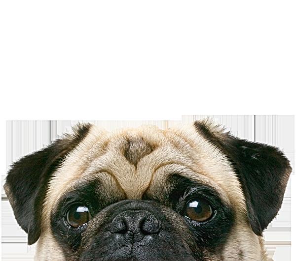 Qu'est-ce que le cani-coaching