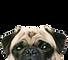 dibujo perro mirando