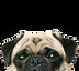 pug-supplements-1.jpg
