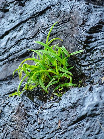 Photo by Vinay Balraj on Unsplash Rock Growth.jpg