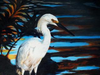 Evening Egret.JPG