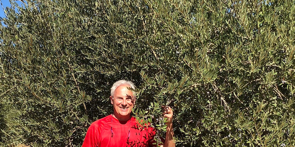 Taking the Mystery out of Extra Virgin Olive Oil