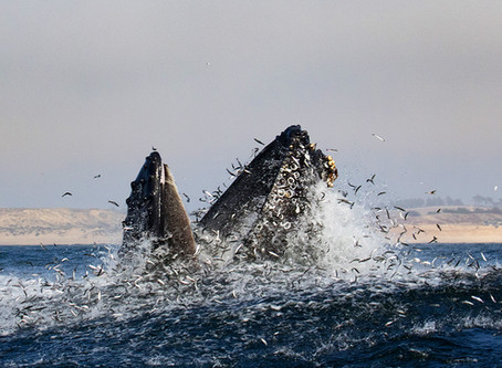 ~SOLD OUT~ WHALE WATCHING WORKSHOP EXCLUSIVELY FOR PHOTOGRAPHERS BY PHOTOGRAPHERS