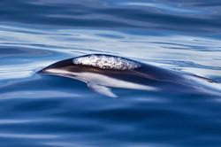 PWS_dolphin_3V2A7397