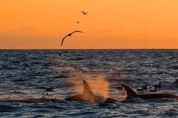 KWs_sunset_albatross_3V2A1402