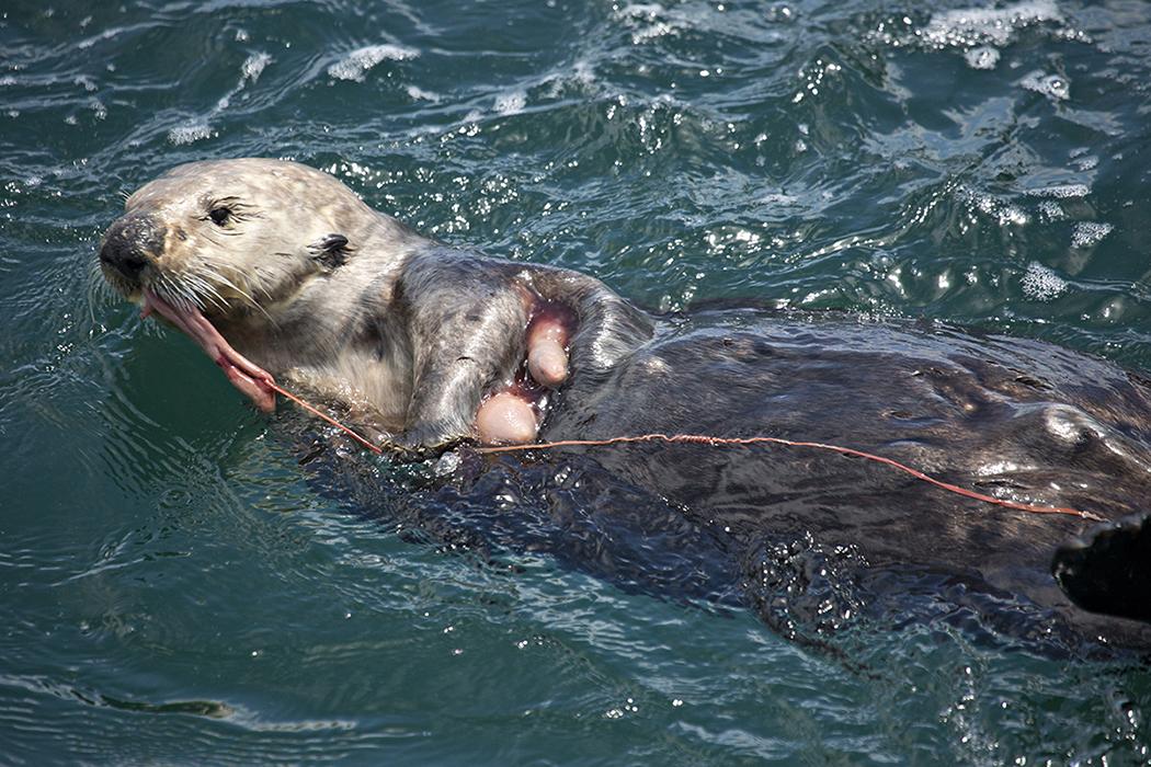 Otter_Innkeeper_BH6A9250rs