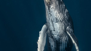 2nd Place in the Underwater Category of The 2020 Wild Lens Magazine Photography Contest