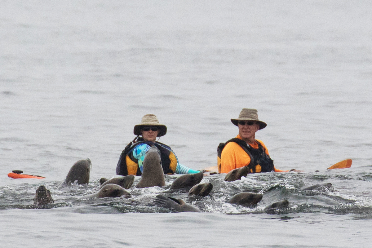 Kayakers_sea_lions_3V2A6237