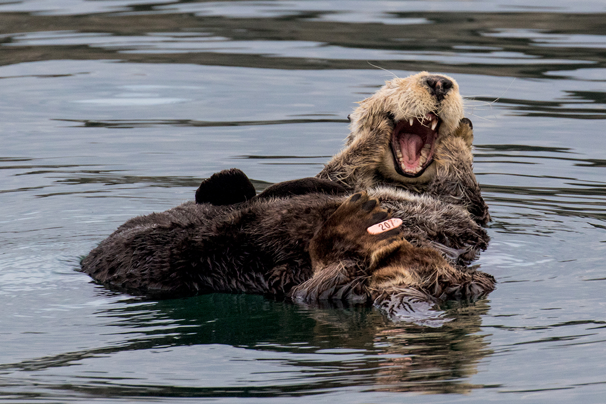 Otter_massage_3V2A3104
