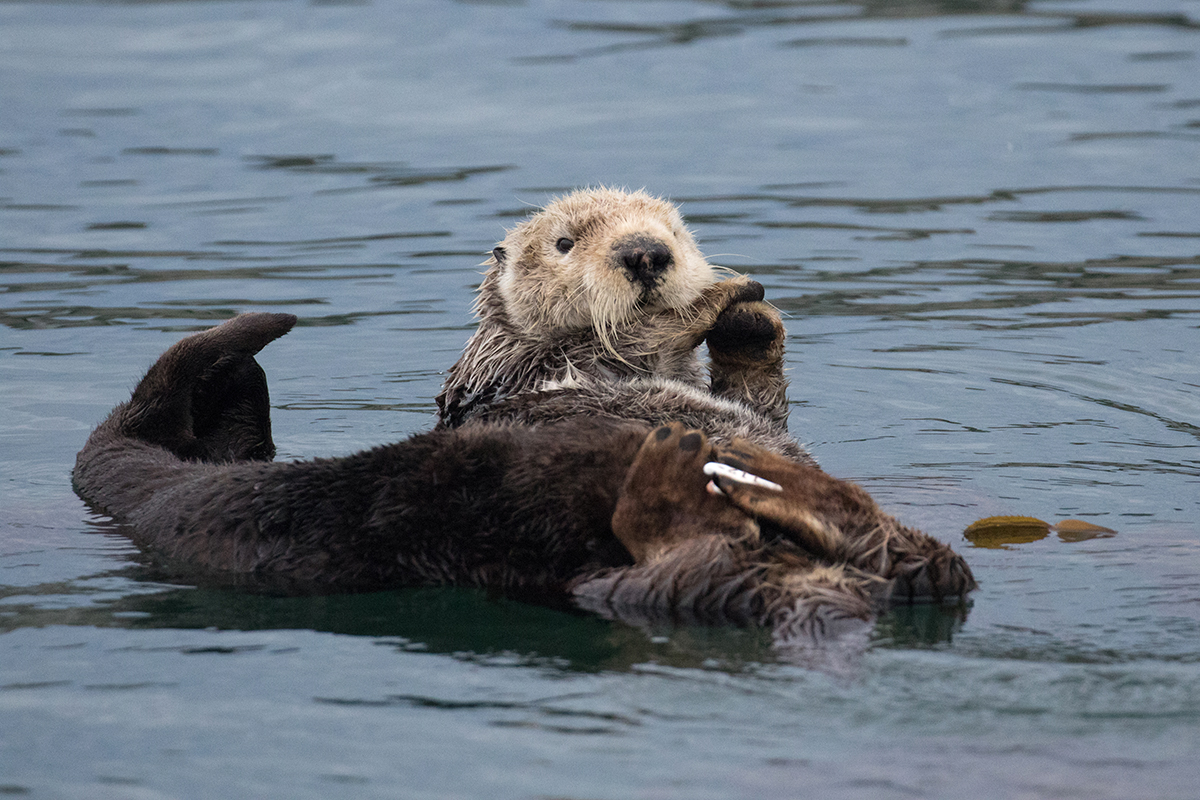 Otter_mom_pup_3V2A3219