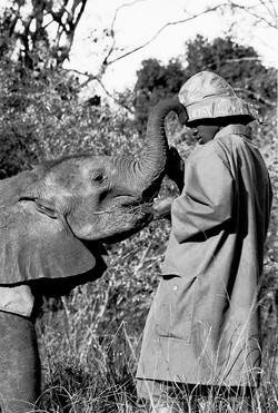 ElephantOrphanrs