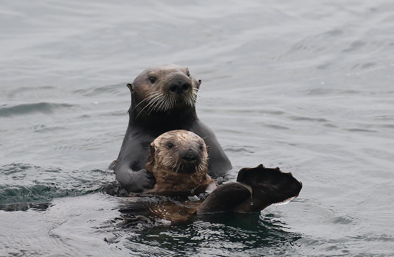 Otter_mom_pup_3V2A7186