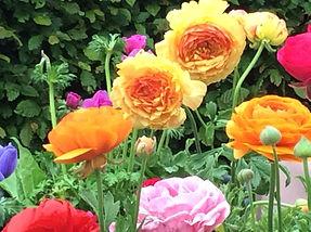 English homegrown garden flowers