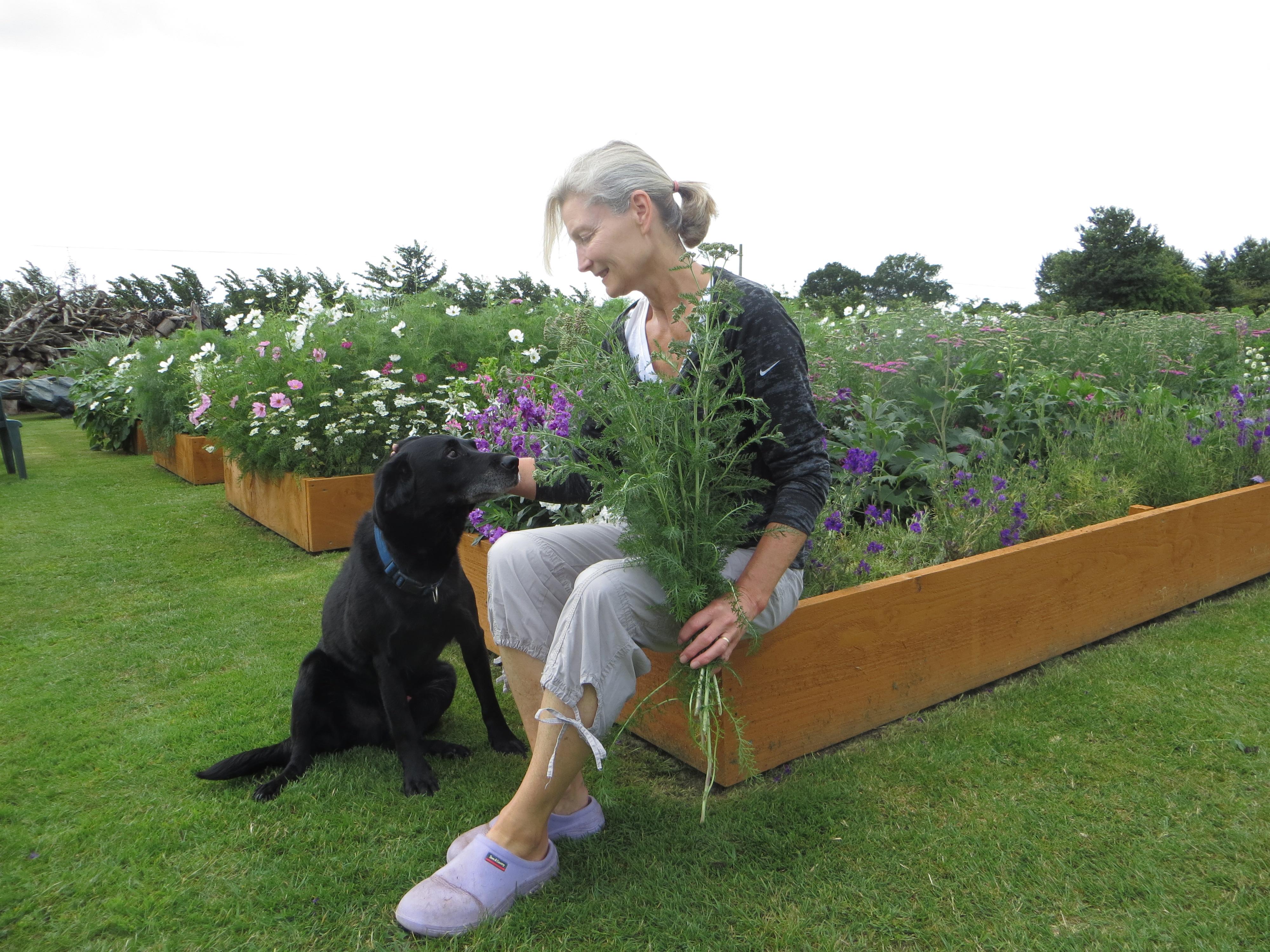 Badbury cut flower garden in Summer