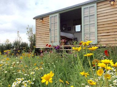 Wild flowers around the shepherd hut