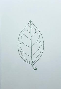 ボタニカルアートはがき 葉