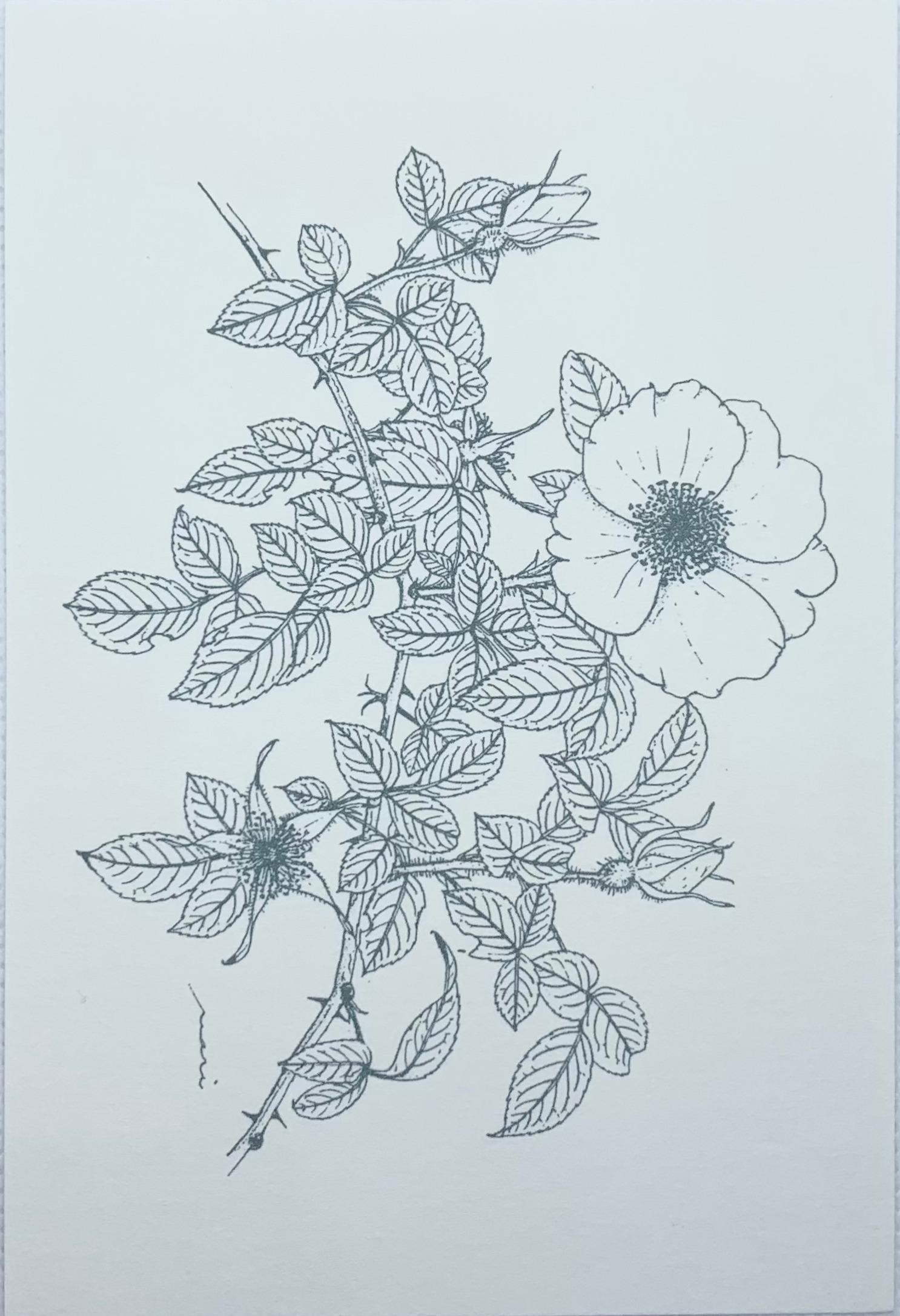 ボタニカルアートはがき バラ