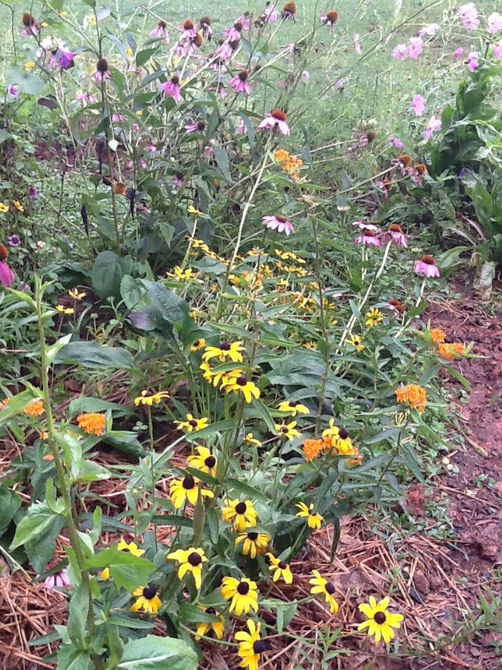 Children's flower garden