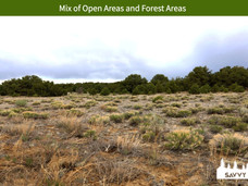 Mix of Open Areas and Forest Areas.jpeg