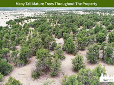 Many Tall Mature Trees Throughout The Property.jpeg