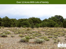 Over 12 Acres With Lots of Variety.jpeg