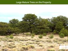 Large Mature Trees on the Property.jpeg