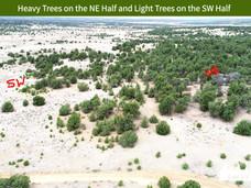 Heavy Trees on the NE Half and Light Trees on the SW Half.jpeg