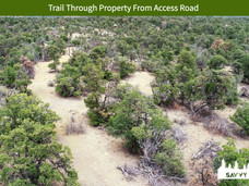 Trail Through Property From Access Road.jpeg