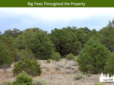 Big Trees Throughout the Property.jpeg