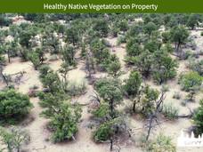 Healthy Native Vegetation on Property.jpeg
