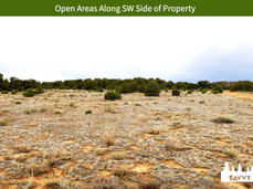 Open Areas Along SW Side of Property.jpeg