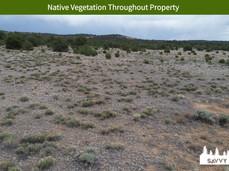 Native Vegetation Throughout Property.jpeg