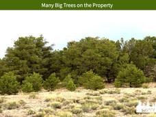 Many Big Trees on the Property.jpeg
