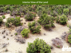 Interior View of the Land.jpeg