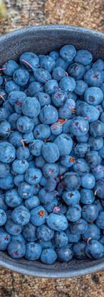 Billberry superfood