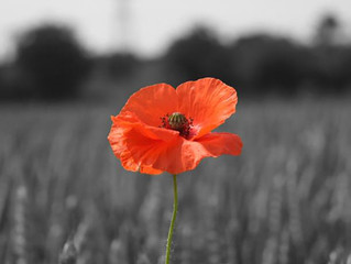 Remembrance Day Service & Commemoration Service: 12 Nov