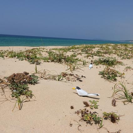 砂浜のいきもの