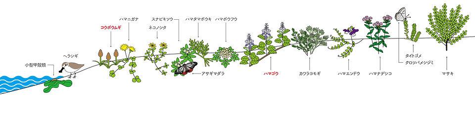 砂の生きものリーフレット2020-03.jpg