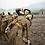 Thumbnail: Faca F-S Comando Britânico – 2ª Guerra Mundial