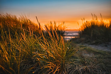 green-grass-beside-sea-722024 beach.jpg