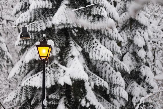 snow lamp post trees.jpg
