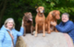 designer dog collars, handmade dog collars, dog collars,Rhodesian Ridgeback,Labrador